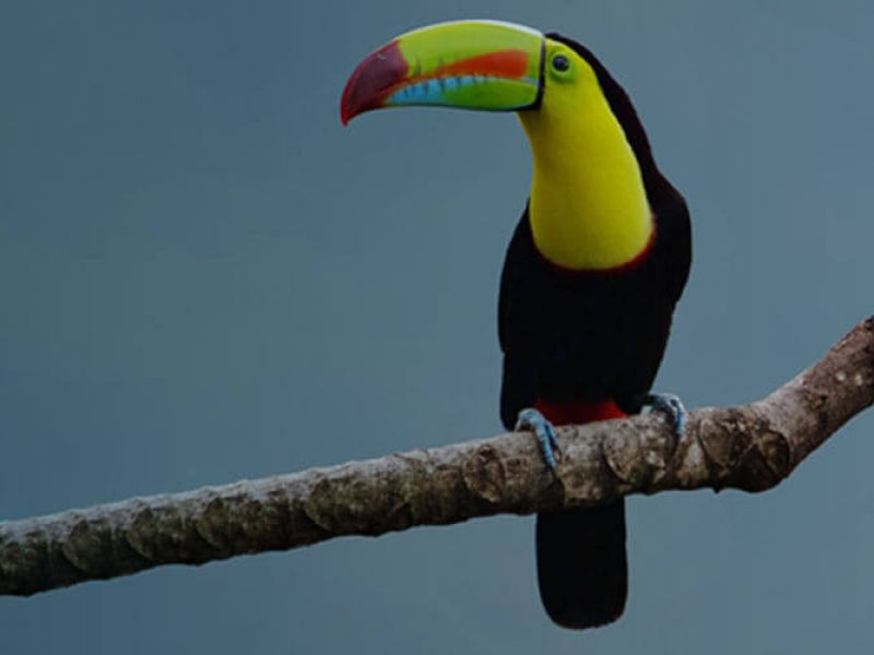 Monteverde Guided Tours - Costa Rica